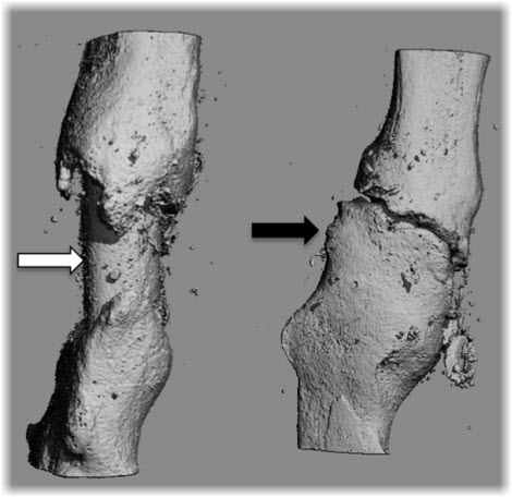 comparison of bone with and without biomimetic film coating