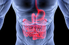 Graphical depiction of human digestive tract